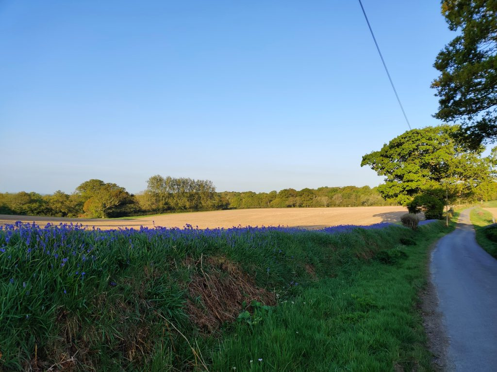 View of one of the walk and talk routes in beautiful Sussex countryside